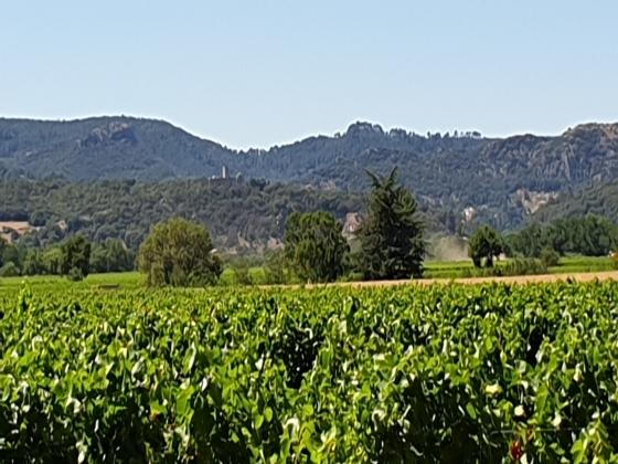 Camping à vendre au coeur du vignoble Languedocien